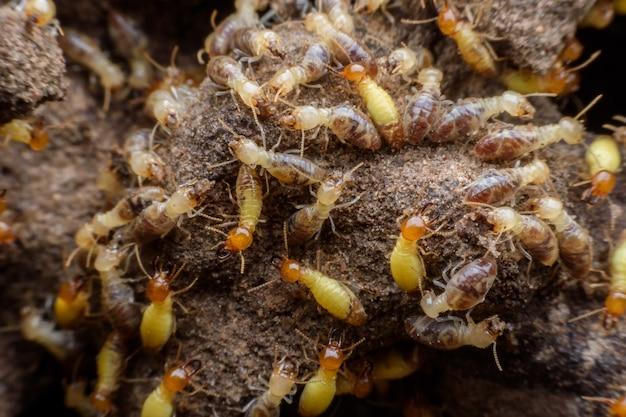 Horden von termiten bauen ihr nest