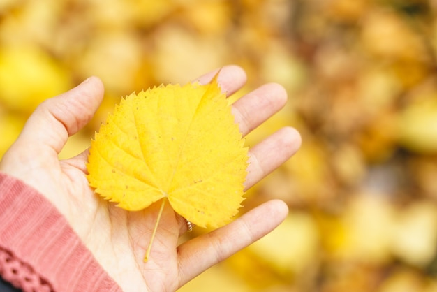 Horizontale ansicht der nicht erkennbaren frau, die ein gelbes herbstblatt hält.