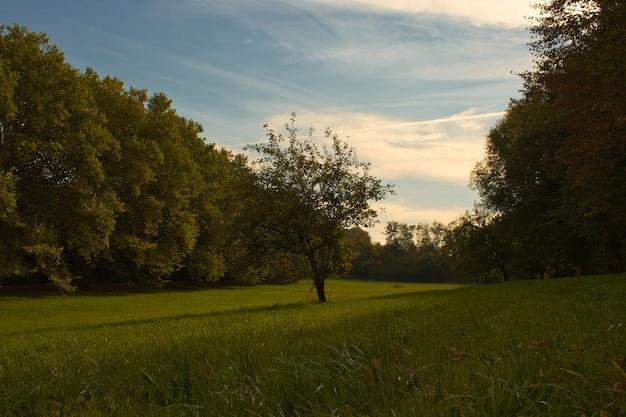 Horizontale ansicht eines baumes, der allein auf einem grünen grund steht, der von einem dichten wald umgeben ist