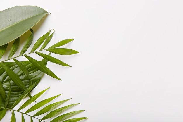 Horizontale aufnahme von grünen pflanzen auf der linken seite des fotos. leeren sie den platz gegen weiß für ihre informationen oder werbung
