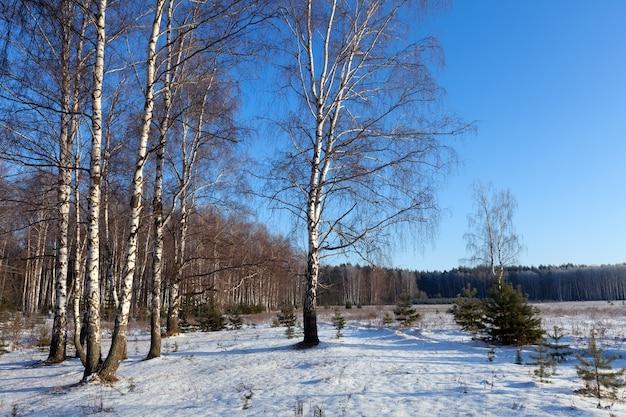Horizontale landschaft mit birkenhandschuh