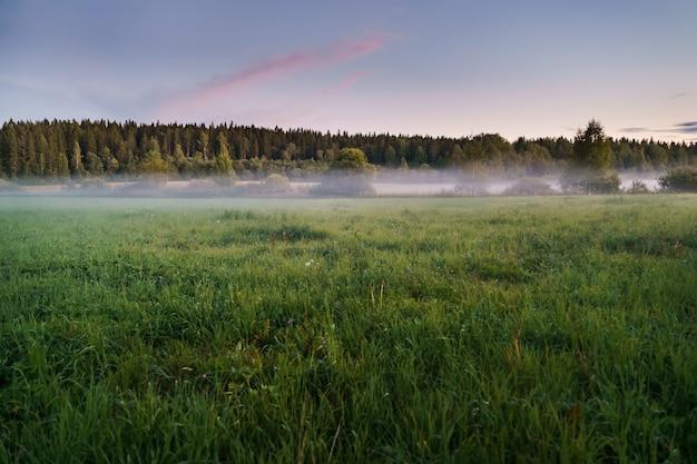 Horizontales grünes feld im nebel vor dem hintergrund eines dichten waldes und eines sonnenuntergangshimmels
