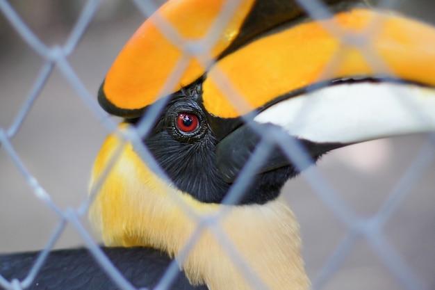 Hornbills im käfig
