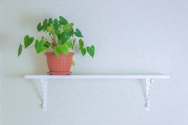 Houseplant in den netten töpfen auf hölzernem regal auf weißer wand mit kopienraum. minimalistisches dekorationsdesign.