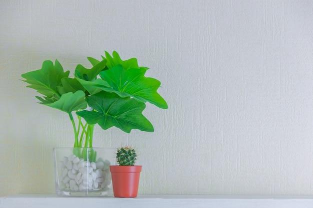 Houseplant und kaktus in den netten töpfen auf hölzernem regal auf weißer wand mit kopienraum. minimalistisches dekorationsdesign.