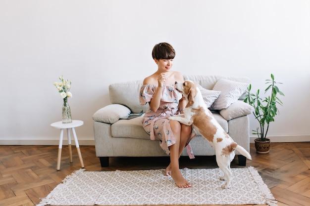 Hübsche dame mit glänzendem haar, das mit beagle-hund spielt, der zeit nach der arbeit zu hause verbringt