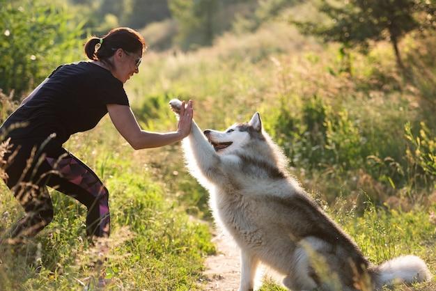 Hübsche frau, die pfoten-trick mit alaskischem malamute in der natur gibt