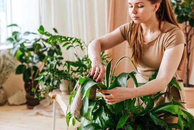 Hübsche junge frau wäscht die blätter von zimmerpflanzen zu hause gewächshaus