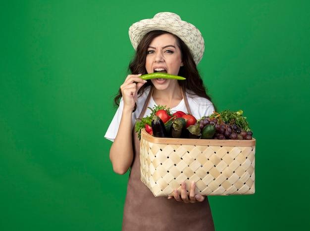 Hübsche junge gärtnerin in uniform mit gartenhut hält gemüsekorb und gibt vor, auf grüner wand isolierten paprika zu beißen