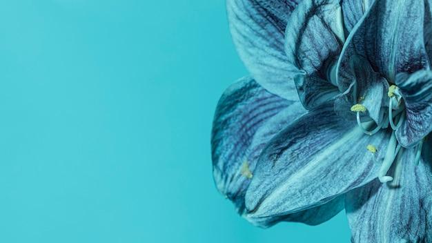 Hübsche makroblaue blume