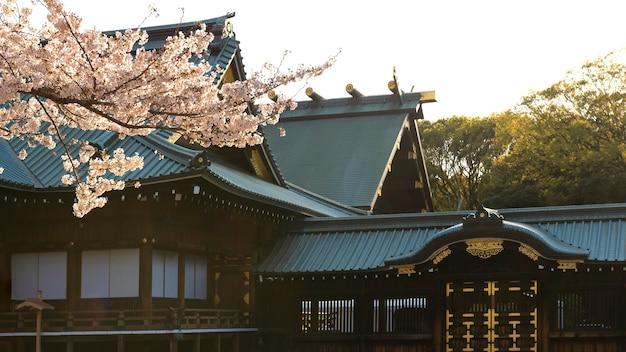 Hübsche pfirsichbaumblüte in tokio bei tageslicht