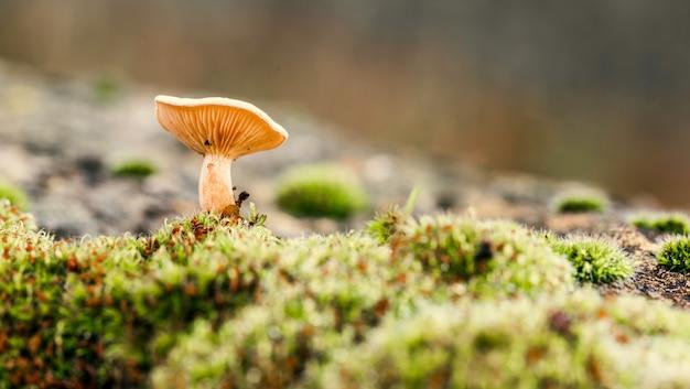 Hübsche plättchen eines pilzes gesehen von einem niedrigen winkel