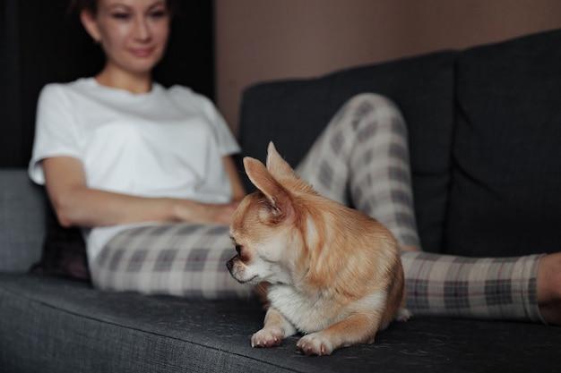 Hübsche reife frau mit chihuahua-hund auf dunklem sofa im wohnzimmer. frau mittleren alters und ihr hündchen chihuahua. konzept haustierliebe und freund der familie