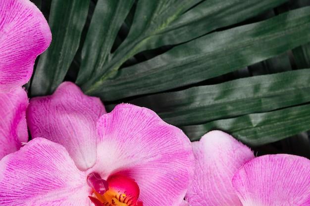 Hübsche rosa orchidee und tropische blätter