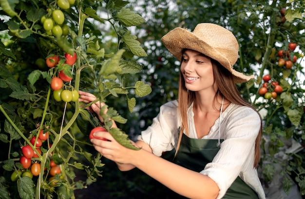 Hübsche weibliche landarbeiterin, die frische reife tomaten in einem gewächshaus beschneidet