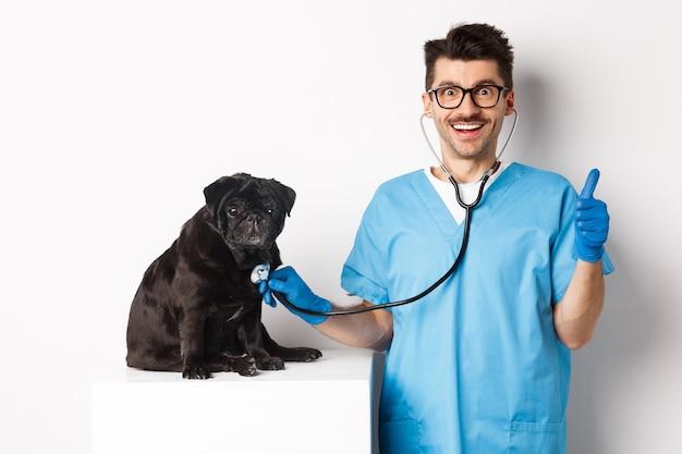 Hübscher arzttierarzt lächelt, untersucht haustier in tierarztklinik, prüft mops mit stethoskop, zeigt daumen hoch und lächelt zufrieden, weiß.