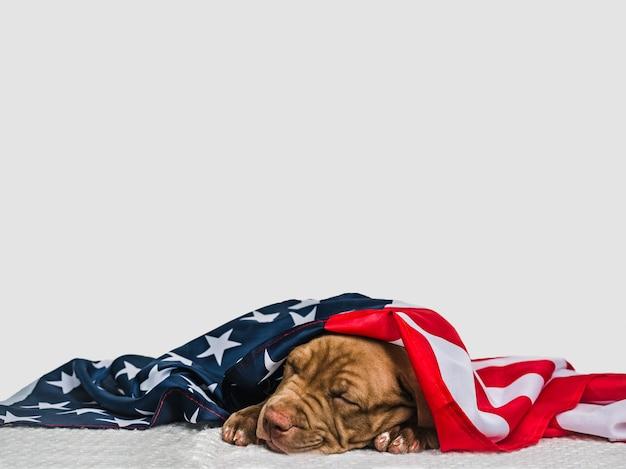 Hübscher, charmanter welpe und amerikanische flagge. nahansicht