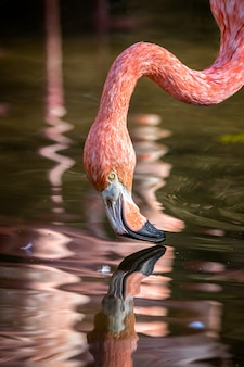 Hübscher flamingo nahaufnahme schuss
