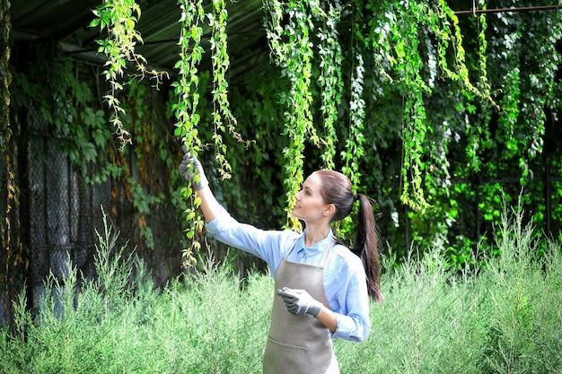 Hübscher junger gärtner, der sich um virginia-kriechpflanze und wacholder im gewächshaus kümmert
