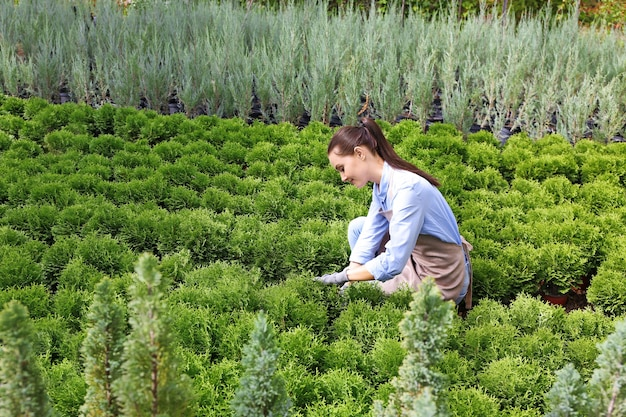 Hübscher junger gärtner, der sich um wacholder im gewächshaus kümmert