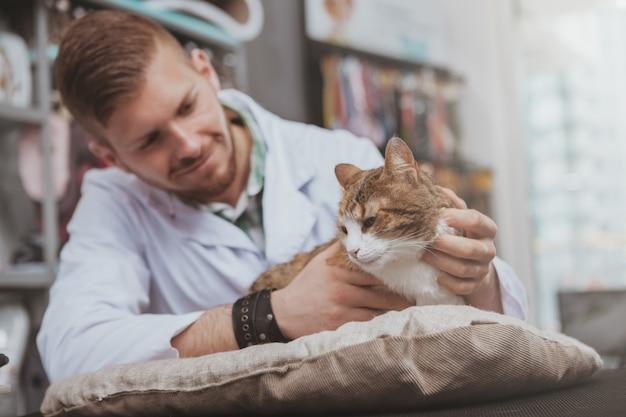 Hübscher junger männlicher tierarzt, der lächelt, schöne katze streichelt und an seiner tierarztklinik arbeitet