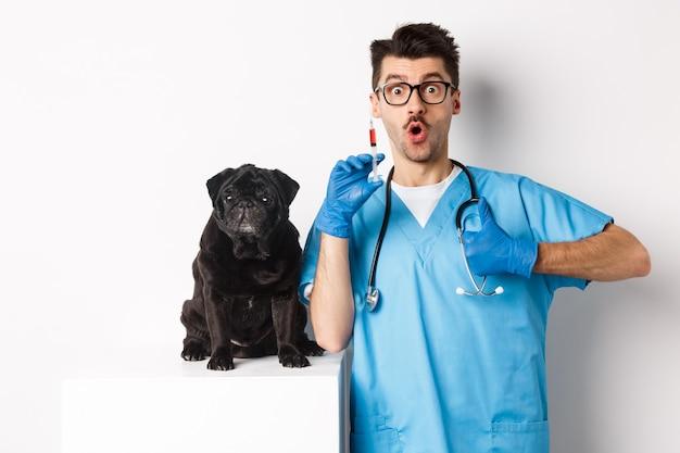 Hübscher männlicher arzttierarzt, der spritze hält und nahe niedlichen schwarzen mops, impfhund, weiß steht.