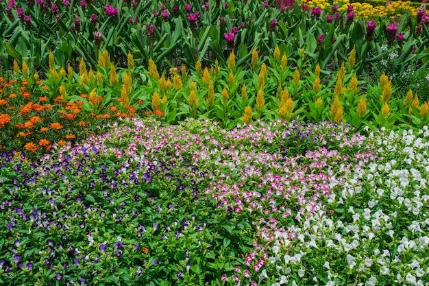 Hübscher manikürter blumengarten mit buntem