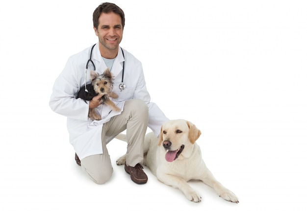 Hübscher tierarzt, der mit yorkshire-terrier und gelbem labrador auf weißem hintergrund aufwirft