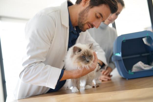 Hübscher tierarzt, der schöne katze in der klinik mit inhaber betrachtet