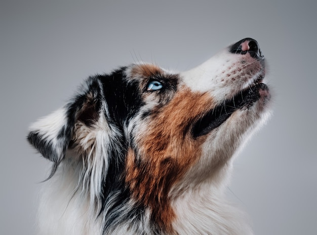 Hübscher und freundlicher hund im weißen hintergrund. bester freund von mensch und haustier.