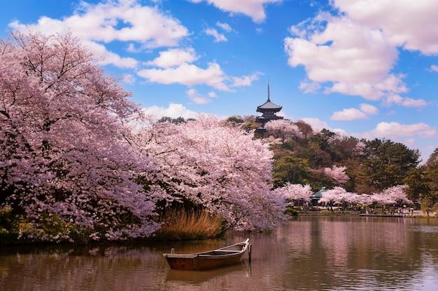 Hübscher und reizender rosa kirschblüten-tapetenhintergrund, tokio, japan, weichzeichner