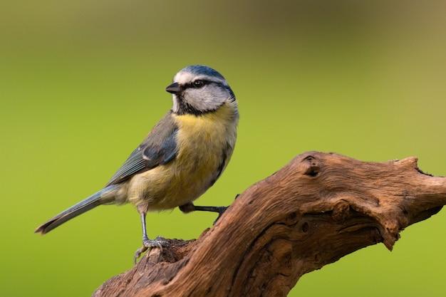 Hübscher vogel auf natur