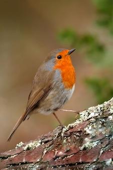 Hübscher vogel mit einem schönen roten gefieder