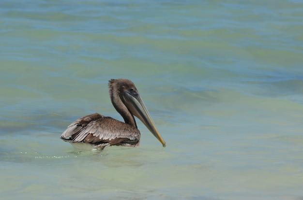 Hübsches geflügel, das im wasser schwimmt und zur seite schaut
