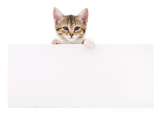 Hübsches kätzchen, das aus einem leeren zeichen heraus späht, isoliert