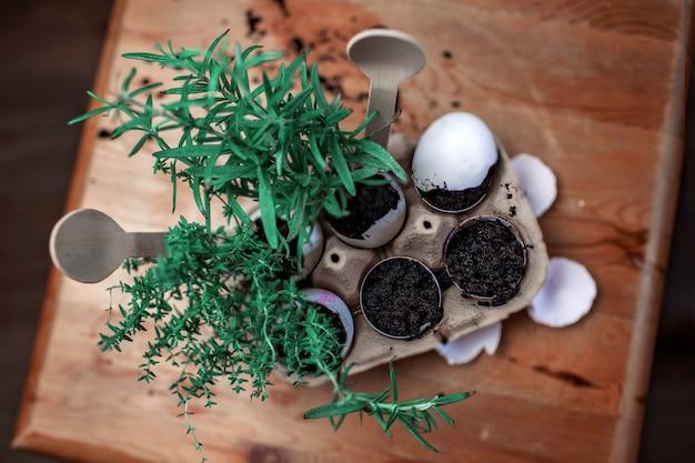Hübsches schulmädchen, das küchenkräuter in der eierschale anbaut, gartenarbeit ohne abfall, gewächshaus