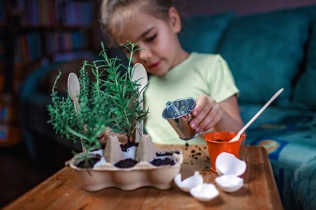 Hübsches schulmädchen, das küchenkräuter in der eierschale, im rosmary und im thymian, im null-abfall-gartenkonzept, im gewächshaus und im gesunden lebensstil anbaut