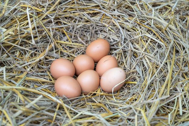Hühnereier im trockenen stroh nisten, hühner, die auf natürliche weise eier legen