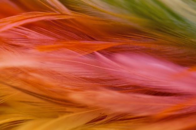 Hühnerfedern in der weichen und unschärfeart für den hintergrund, abstrakte kunst