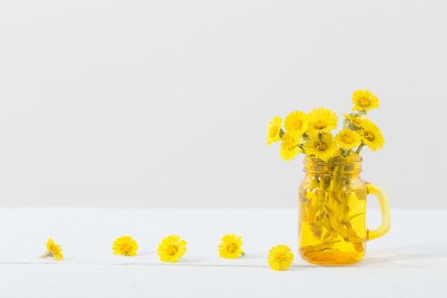 Huflattich blüht im gelben glas auf weiß
