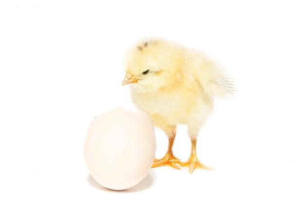 Huhn aus der schale geschlüpft