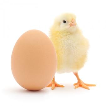 Huhn und ei isoliert