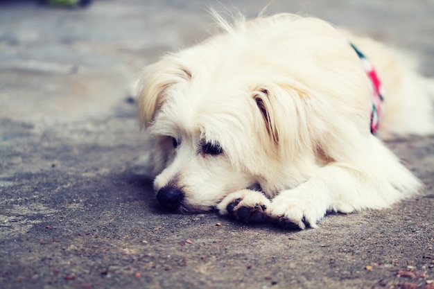 Hund allein einsam
