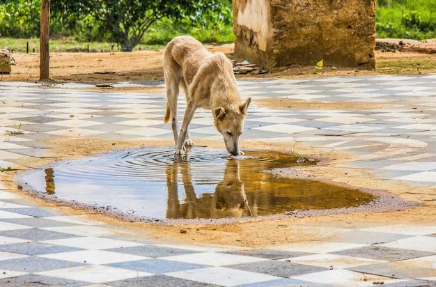 Hund allgemein bekannt als köter