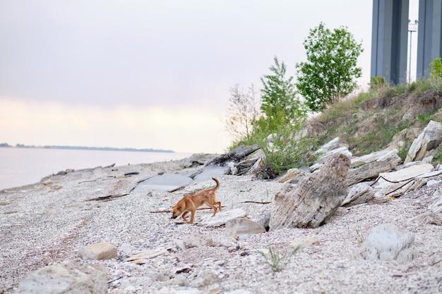 Hund am meer. obdachloser hund auf der straße.
