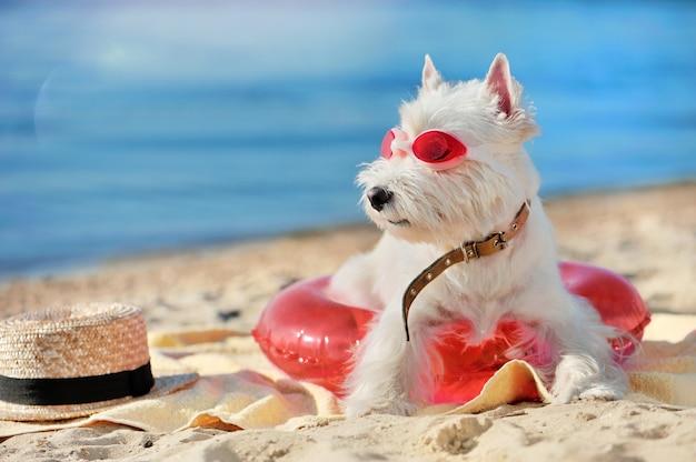 Hund am strand, der zum meer schaut