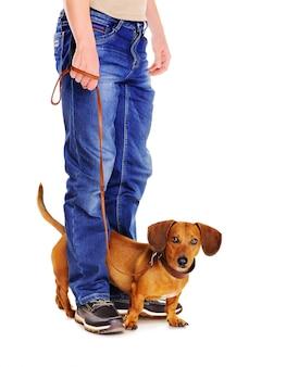 Hund an der leine bereit für einen spaziergang