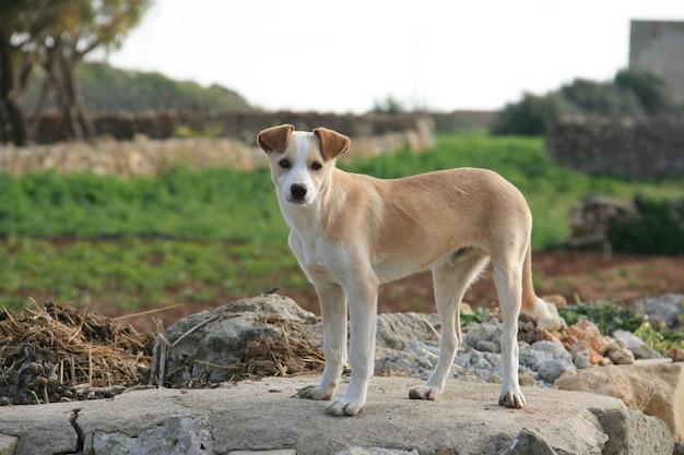 Hund auf dem bauernhof