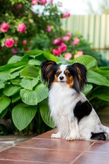 Hund auf der veranda