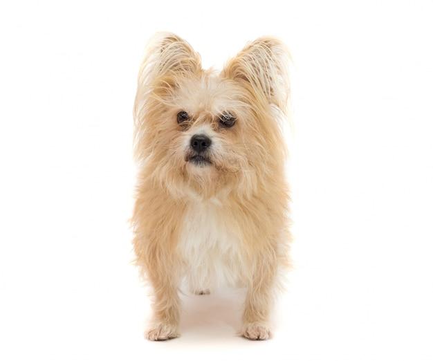 Hund auf einem weißen hintergrund